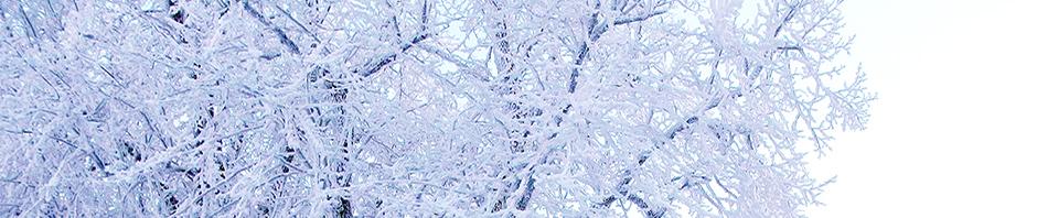 Lumisia puita, Kuva: Risto Mustonen
